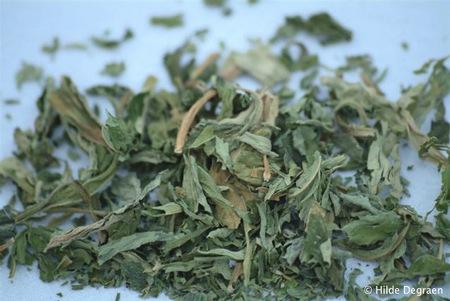 Stevia - Copyright: Hilde Degraen